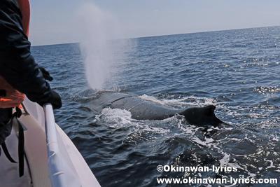 ホエールウォッチング(タックワリ)@慶良間諸島