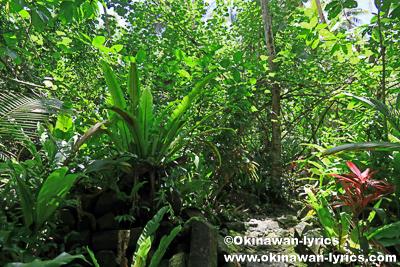 ナンマドール遺跡(Nan Madol Ruins)への道@ポンペイ(ミクロネシア連邦)