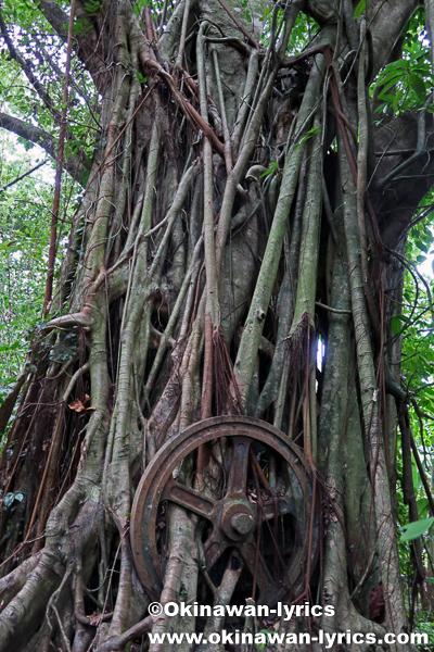 日本軍戦跡(Banyan Wheel)@ランガル島(Lenger island)、ポンペイ(ミクロネシア連邦)