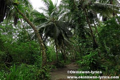ランガル島(Lenger island)@ポンペイ(ミクロネシア連邦)