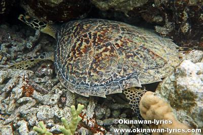 シュノーケル@Marine Protected Area,ポンペイ(ミクロネシア連邦)
