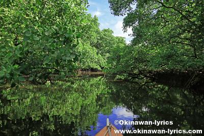 カヤック@Mother Snake's mangrove channels、コスラエ(ミクロネシア連邦)