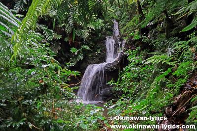 三段の滝@オマ山、コスラエ(ミクロネシア連邦)