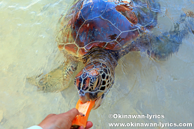 Turtle Bay@エファテ島(Efate island),バヌアツ