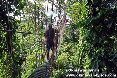ジップライン(Vanuatu Jungle Zipline)@エファテ島(Efate island),バヌアツ