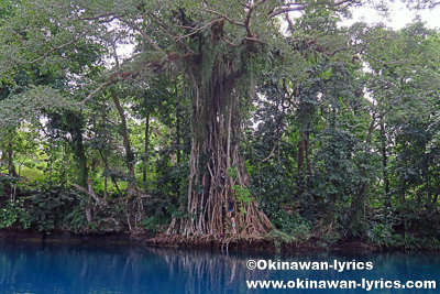 Matevulu Blue Hole@サント島(Espiritu Santo Island),バヌアツ