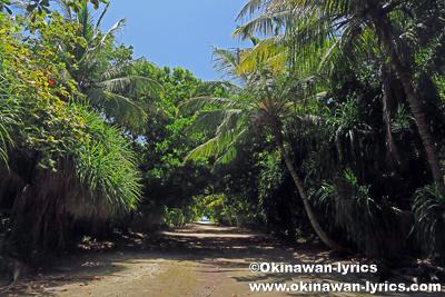ダラバンドゥ島の道@バア環礁,モルディブ