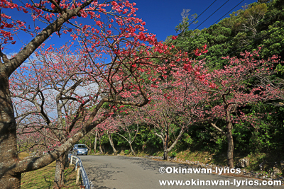 第41回もとぶ八重岳桜まつり@本部町