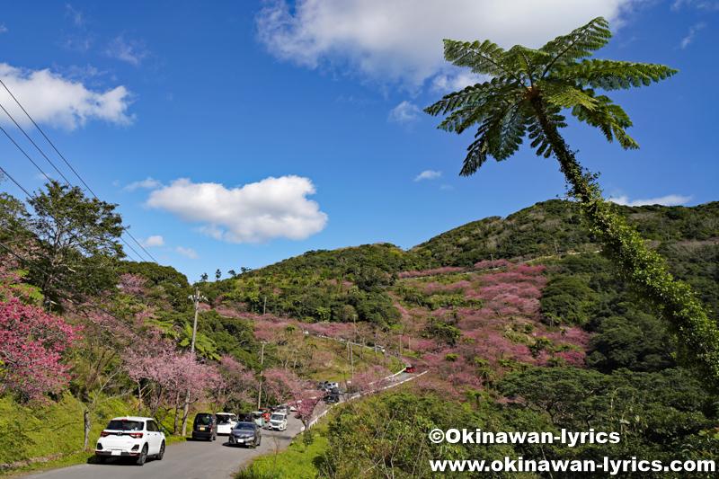 第43回 もとぶ八重岳桜まつり